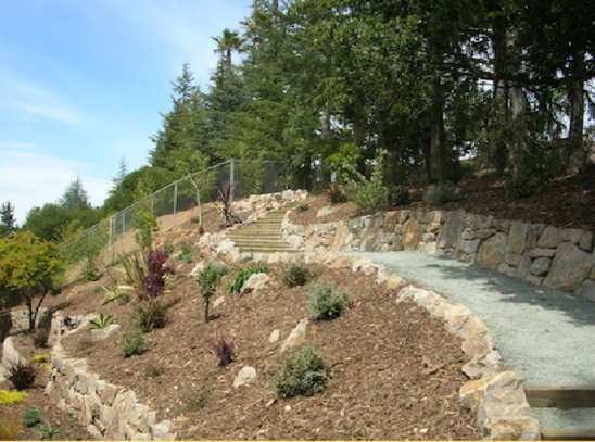 AFTER: Newly planted hillside, using a variety of colors and textures, with a priority on low-maintenance, drought-tolerant selections.